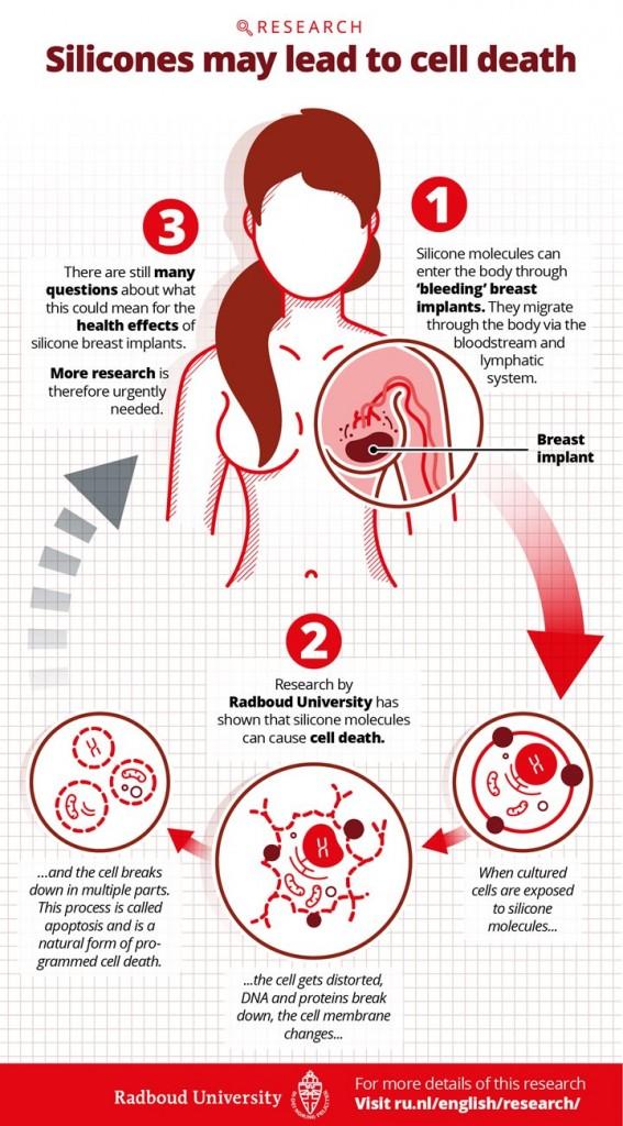infographic_celdood_siliconen_en